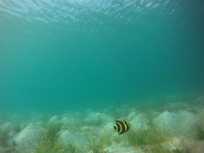 st croix bucks island snorkeling caribbean sea adventures (1)