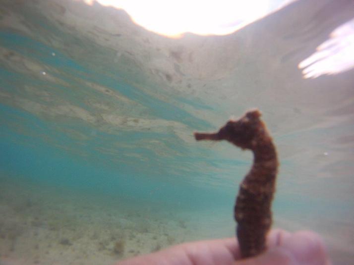st croix bucks island snorkeling caribbean sea adventures (11)