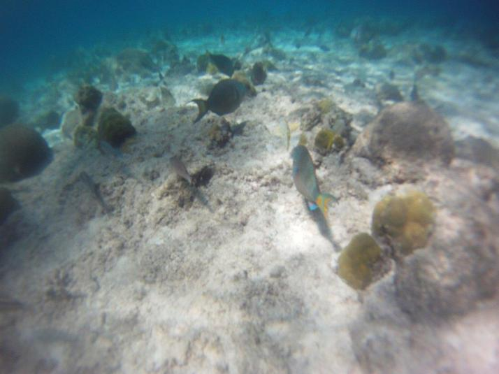 st croix bucks island snorkeling caribbean sea adventures (12)