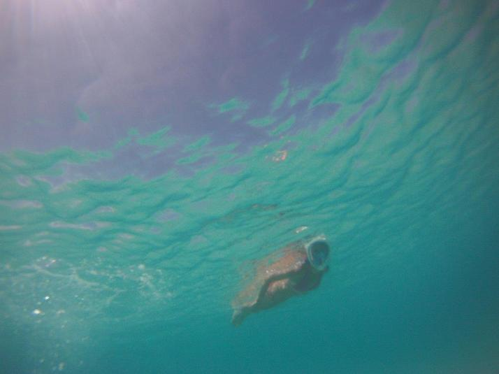 st croix bucks island snorkeling caribbean sea adventures (14)