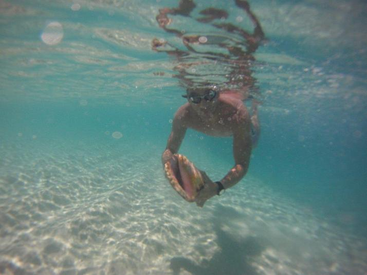 st croix bucks island snorkeling caribbean sea adventures (15)