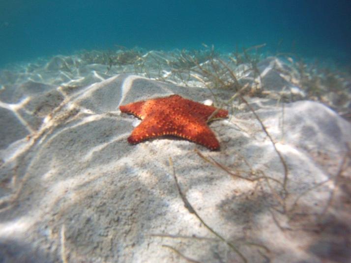 st croix bucks island snorkeling caribbean sea adventures (2)