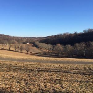 Rockefeller State Park NY trails running run (1)