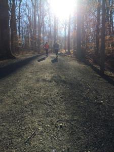 Rockefeller State Park NY trails running run (15)