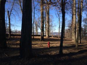Rockefeller State Park NY trails running run (6)