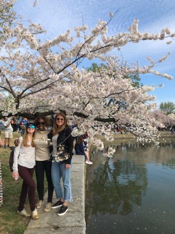 2019 credit union cherry blossom 10 mile race Washington DC 1