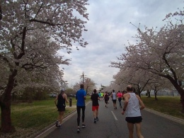 2019 credit union cherry blossom 10 mile race Washington DC 5